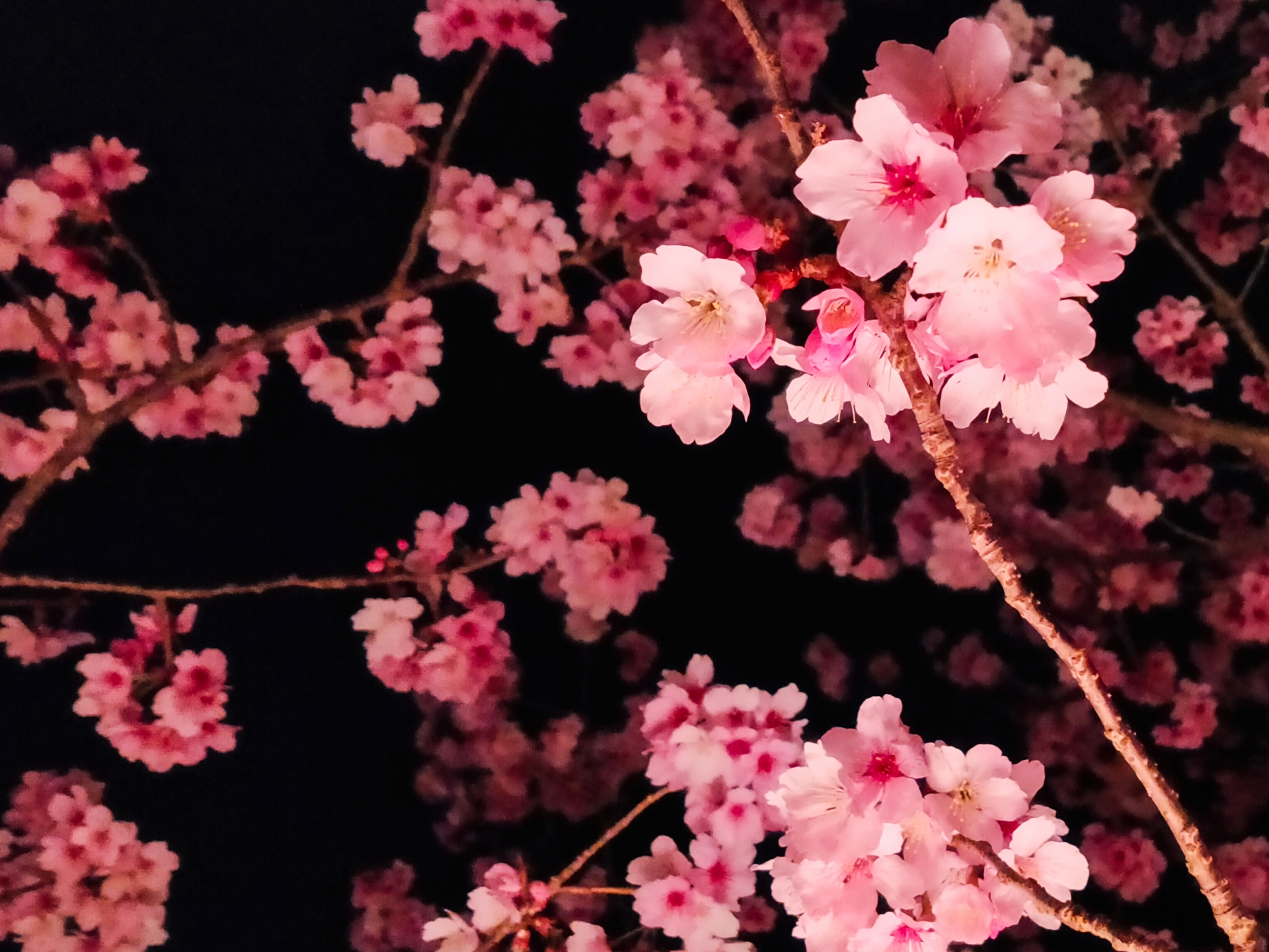 記事 「ありがとう」「おめでとう」心を込めて門出の祝い 夜桜ディナー&厳選食材「神戸牛」のアイキャッチ画像